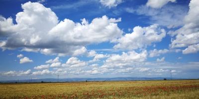 Campo di grano e papaveri nella campagna di Cerignola.