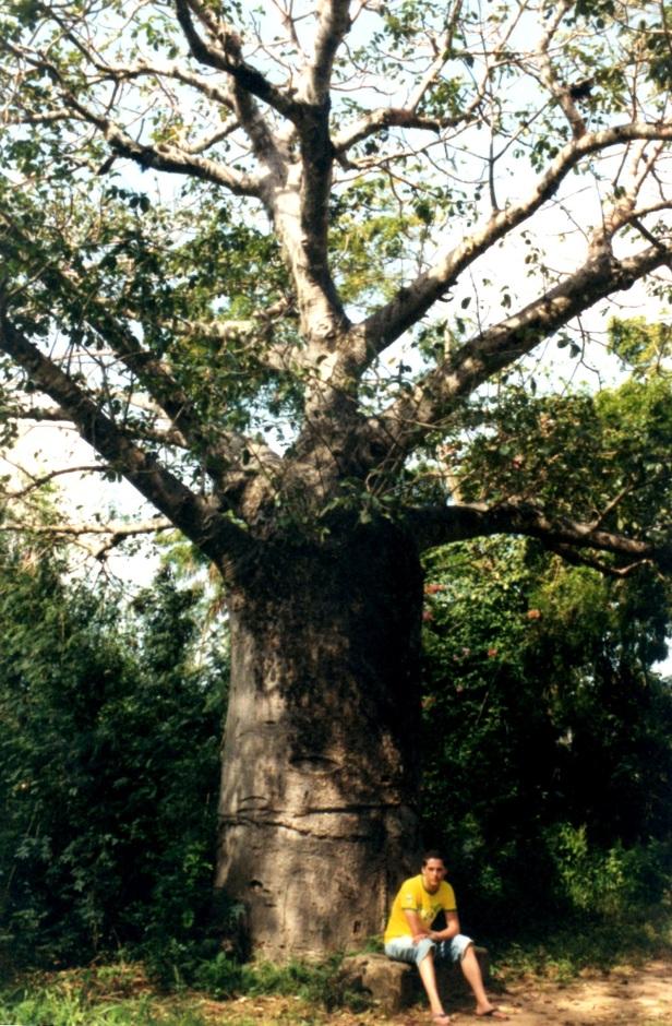 Un giovane baobab.