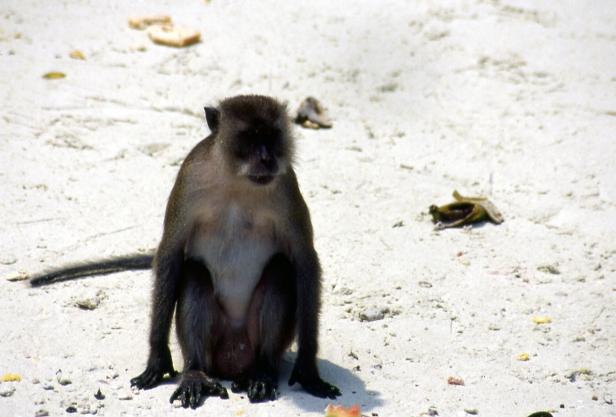 Phi Phi Island.
