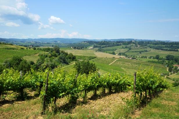 La Val d'Elsa con i vigneti, si produce il buonissimo vino Vernaccia di San Gimignano.